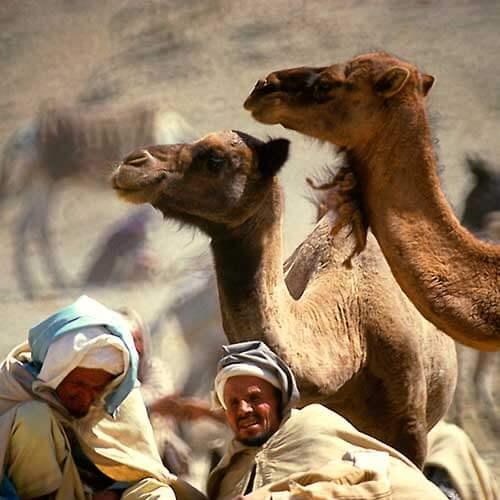 Rundreise durch die Königsstädte von Marokko (7 Tage)